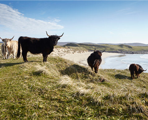 The Hebridean Food Company