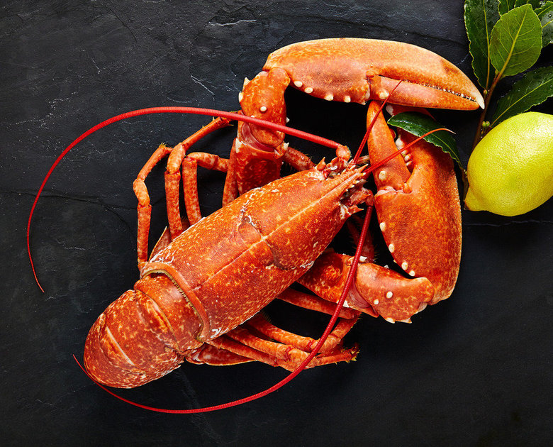 Cooked Medium Lobsters