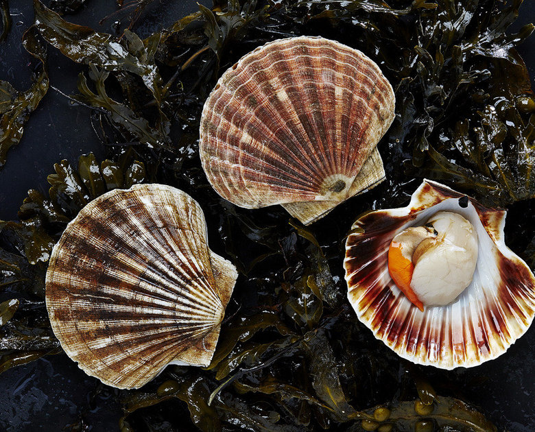 Hand Dived Scallops  Thumbnail