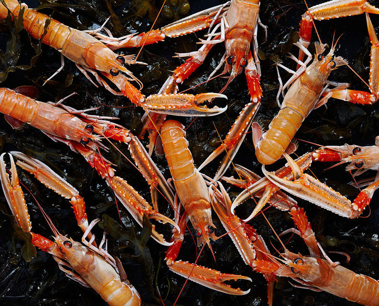 Medium Live Langoustine  Thumbnail